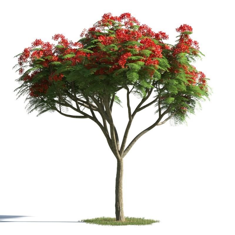 tree 25 AMC1