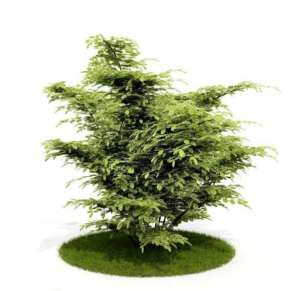 Plant 10 AM52 C4D