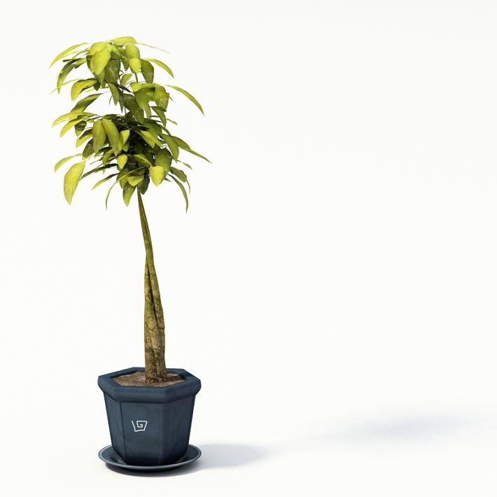 Plant 51 AM24 Archmodels