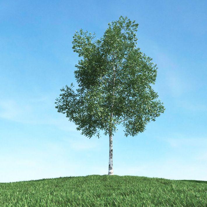 tree 03 am106