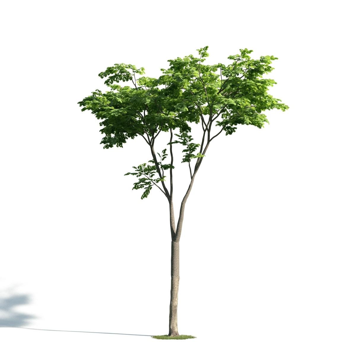 Tree 20 AM171 Archmodels