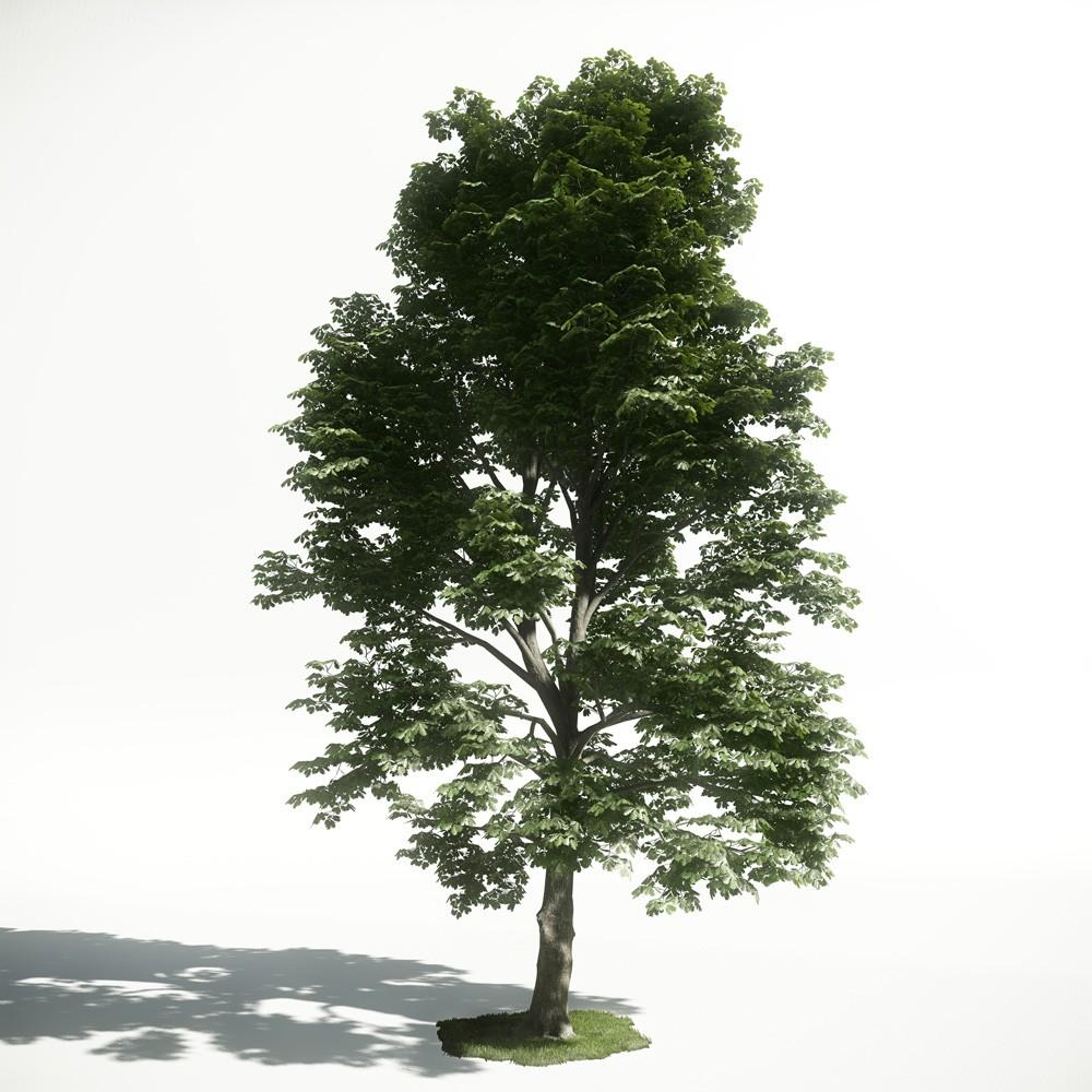 Tree 52 amce1