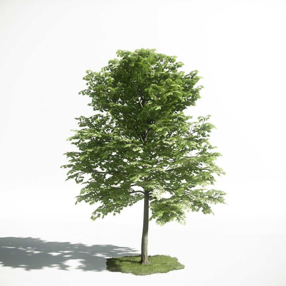 Tree 23 AM1 for CryEngine Archmodels
