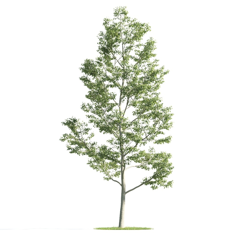 Tree 27 AM176 Archmodels