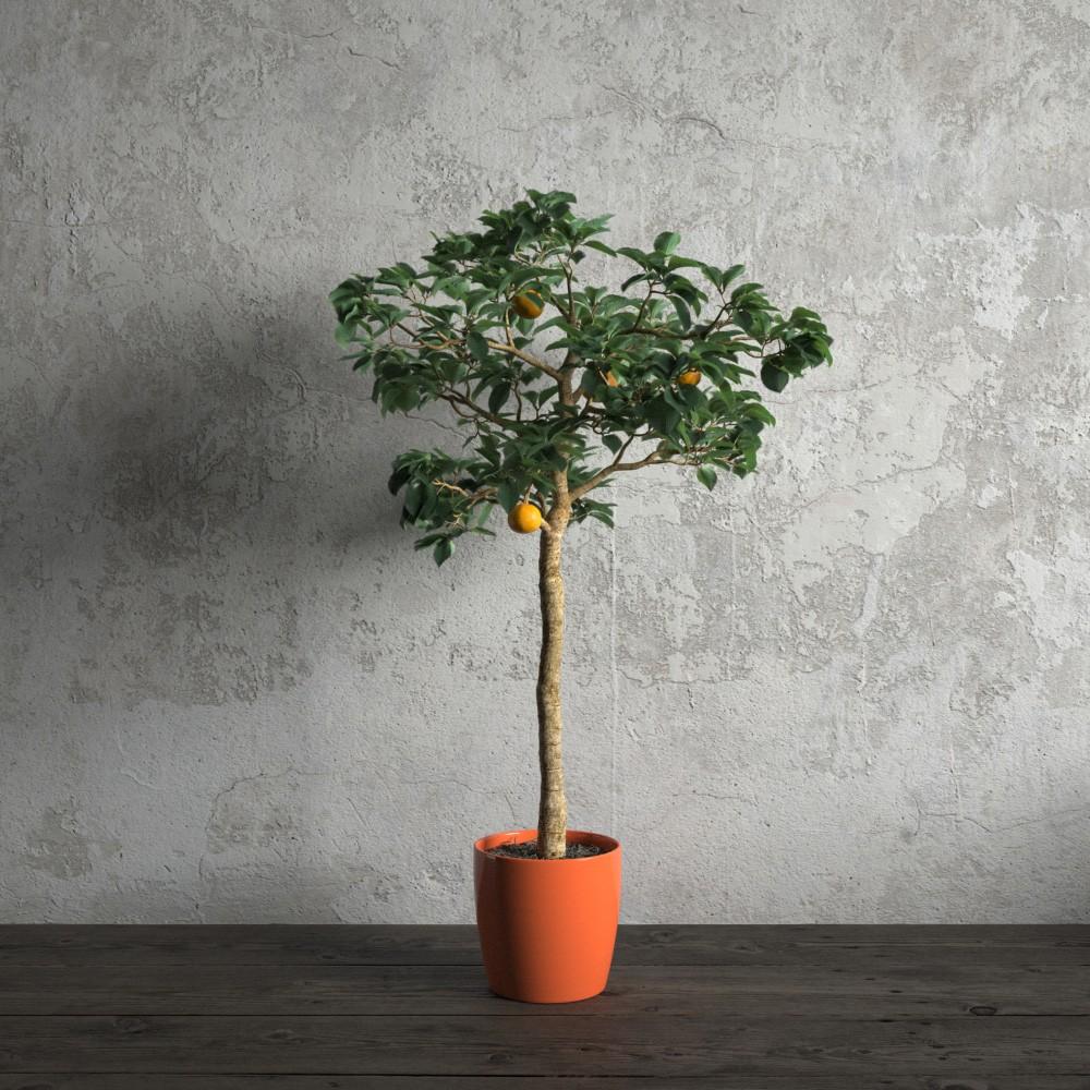 plant 48 am173
