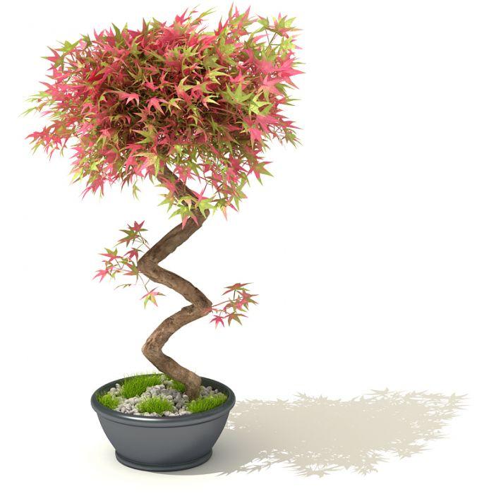 plant 29 AM41