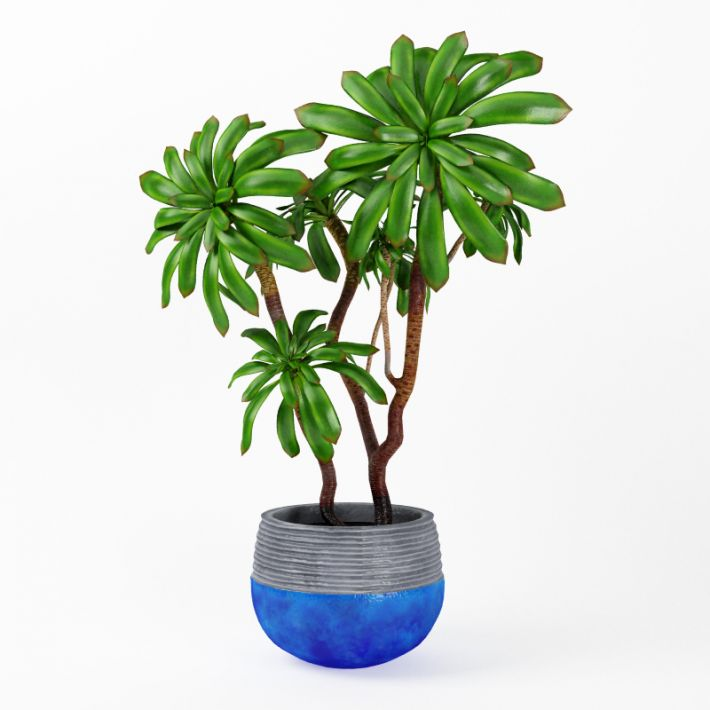Plant 18 AM75 Archmodels