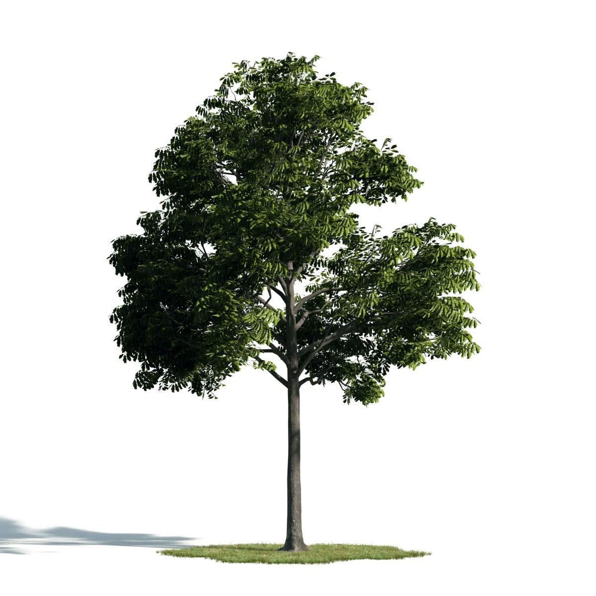 Tree 31 am171
