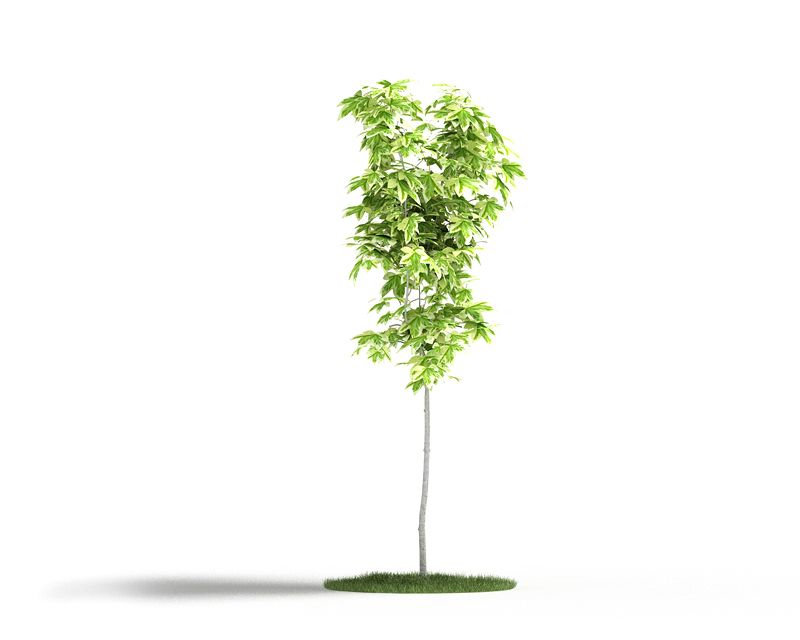 Plant 18 AM4 for Cinema4D Archmodels