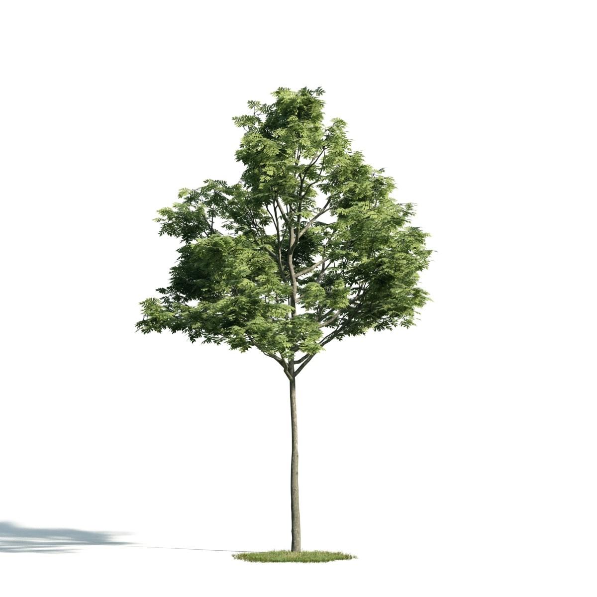 Tree 37 AM171 Archmodels
