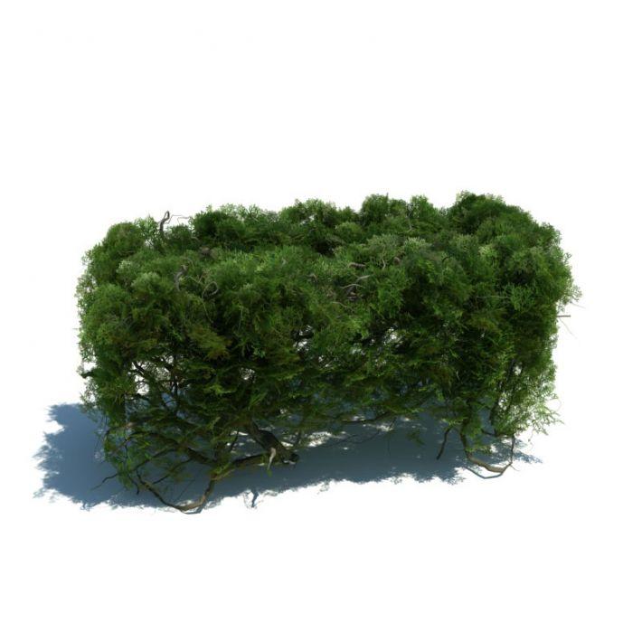 hedge 152 AM126 Archmodels