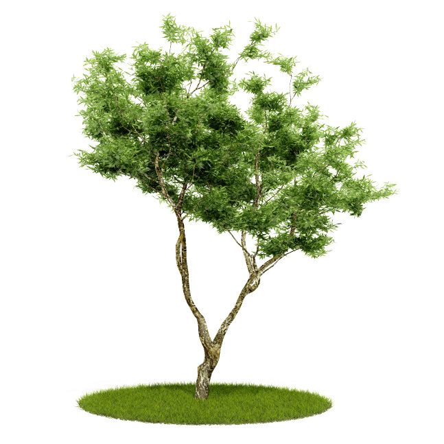 Plant 53 AM52 for Cinema4D Archmodels