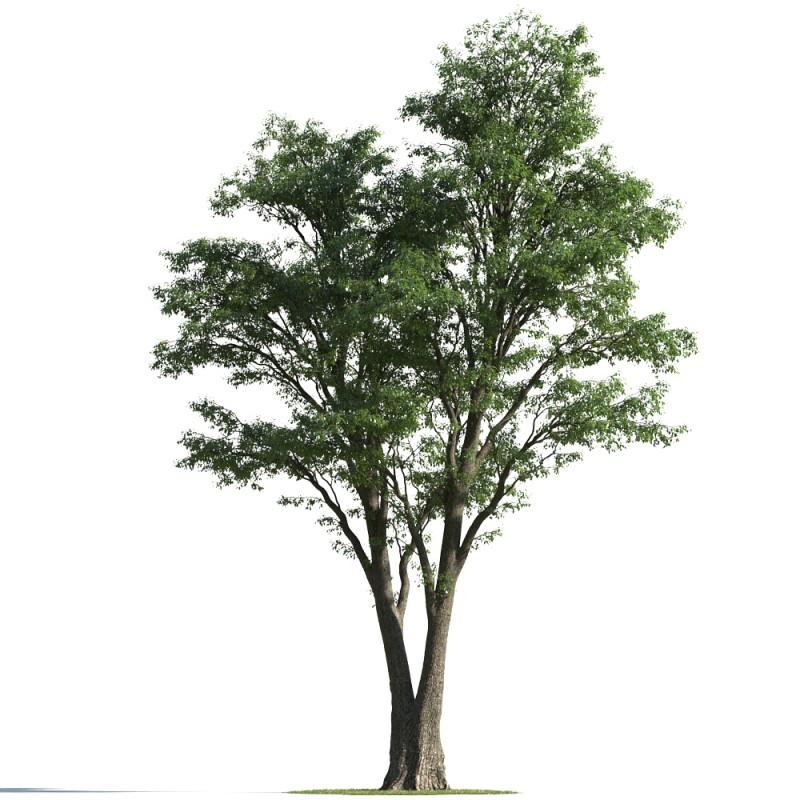 tree 5 AMC1