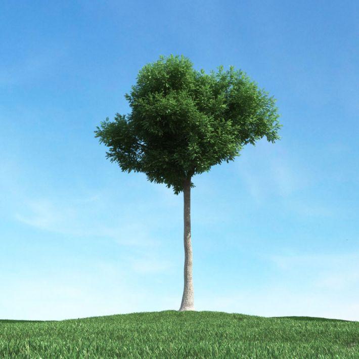 tree 24 AM106 Archmodels