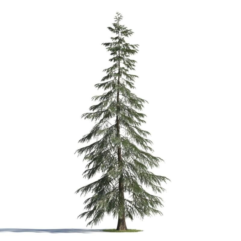 tree 72 AMC01