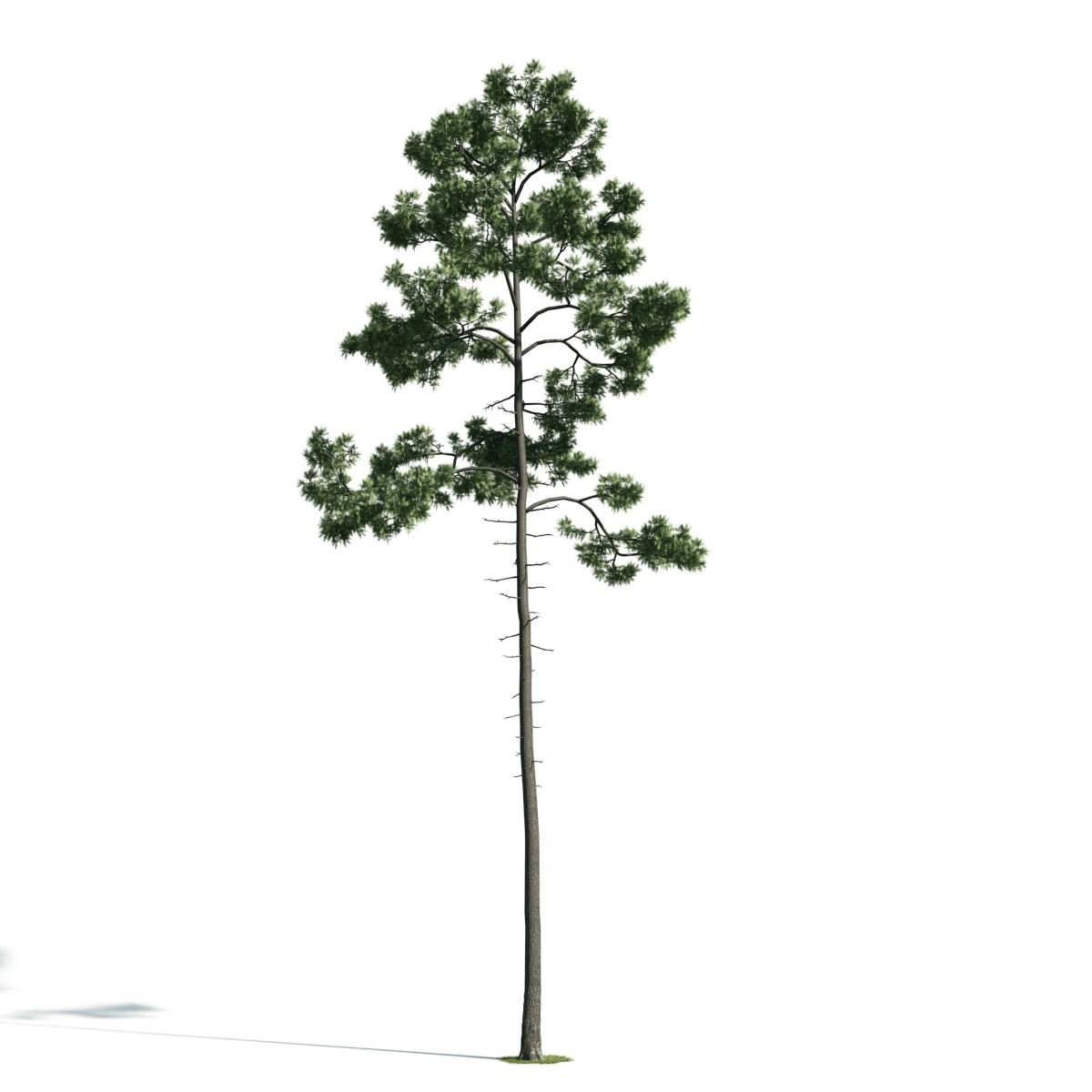 Tree 45 AM171 Archmodels