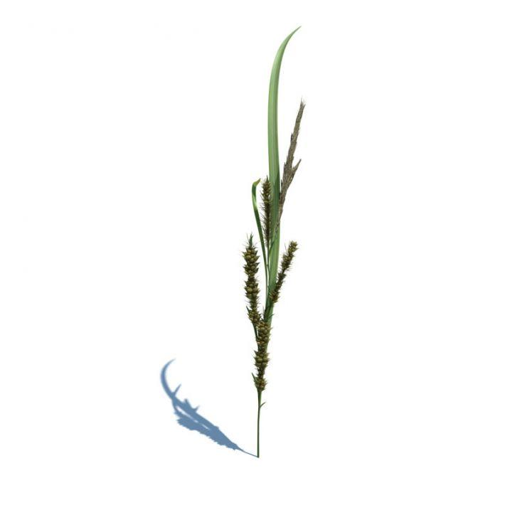 Echinochloa crus galli 1 AM124 Archmodels