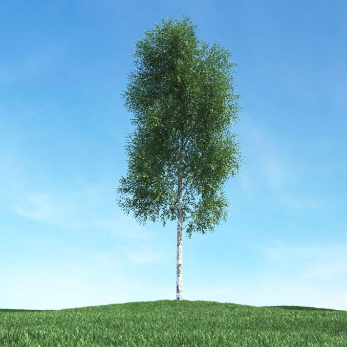 tree 09 am106