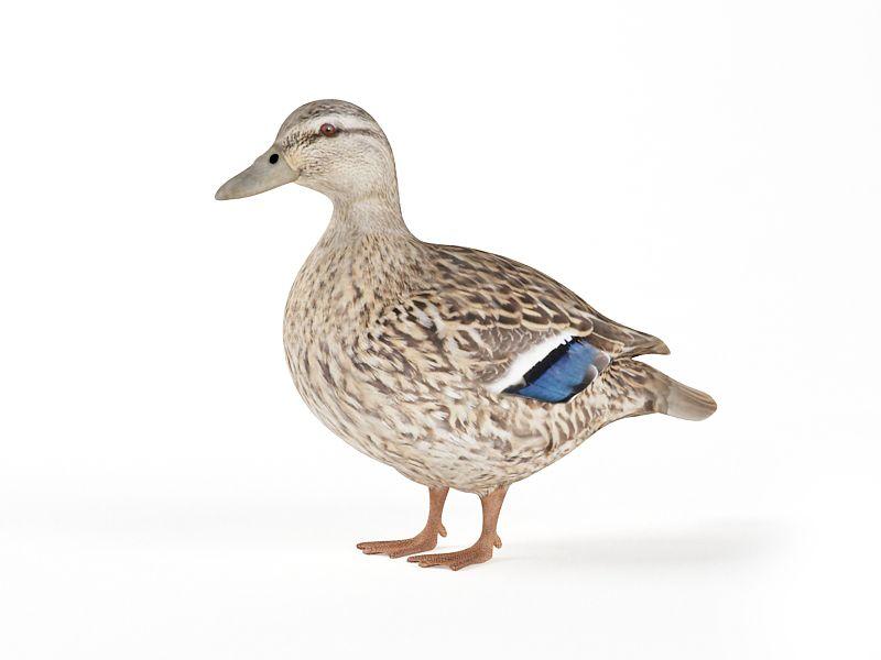 duck 19 AM83 Archmodels