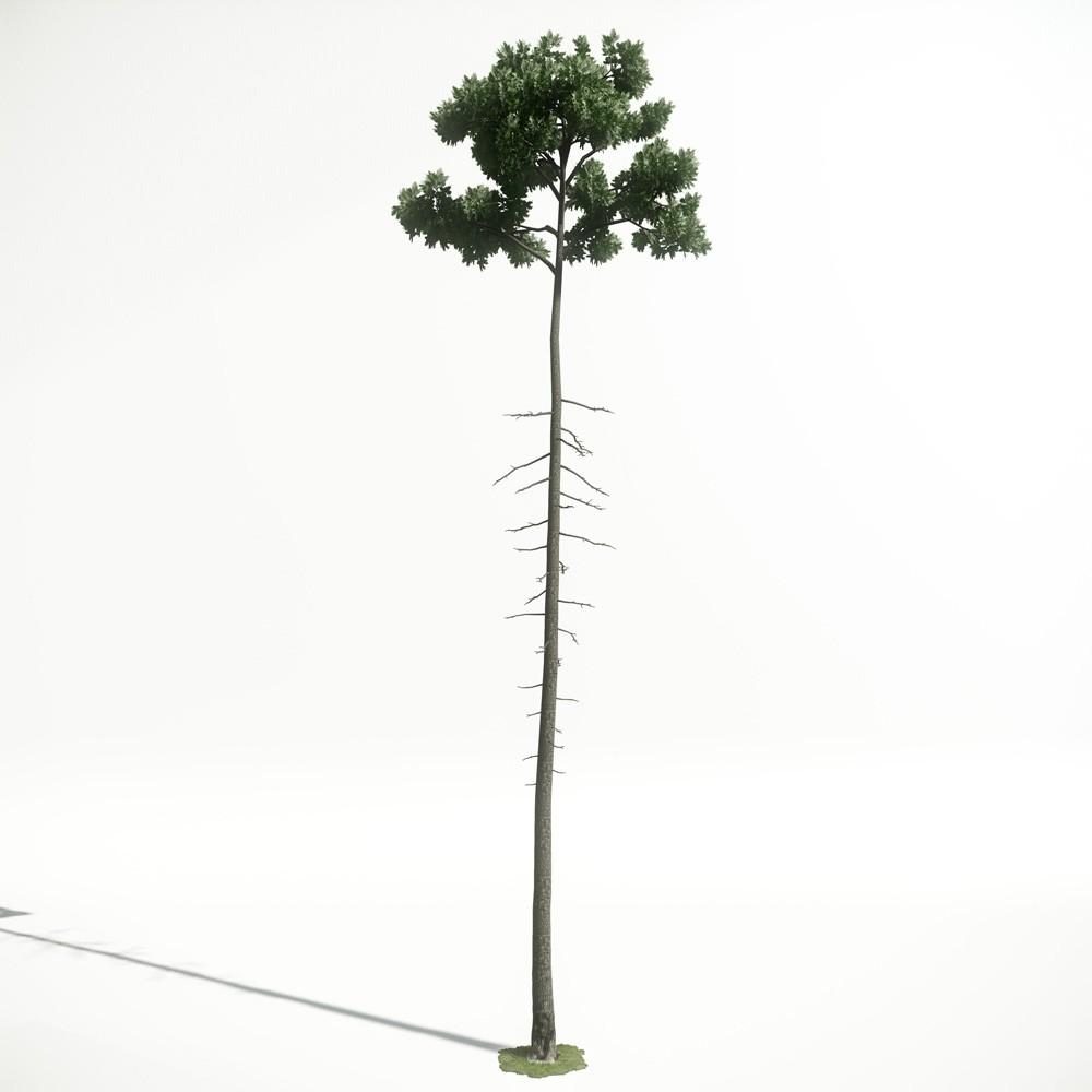 Tree 34 AM1 for CryEngine Archmodels
