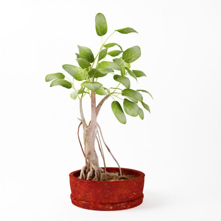 Plant 32 AM75 Archmodels
