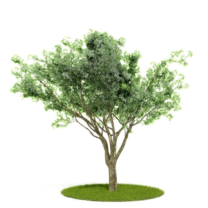 Plant 3 AM52 for Cinema4D Archmodels