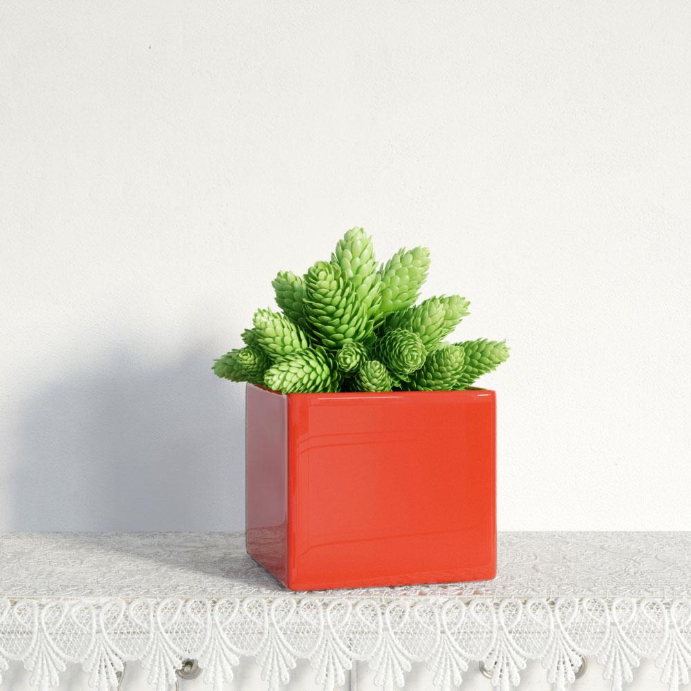 plant 13 AM141 Archmodels