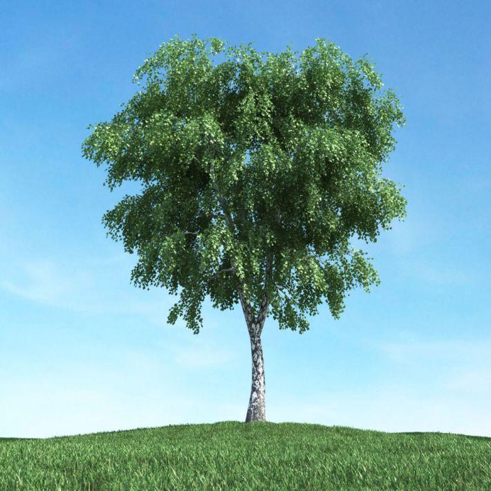 tree 29 am117