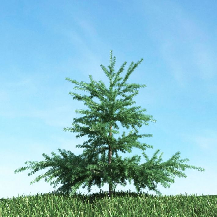 tree 55 AM117 Archmodels