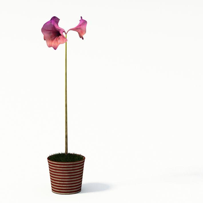 Plant 15 AM24 Archmodels
