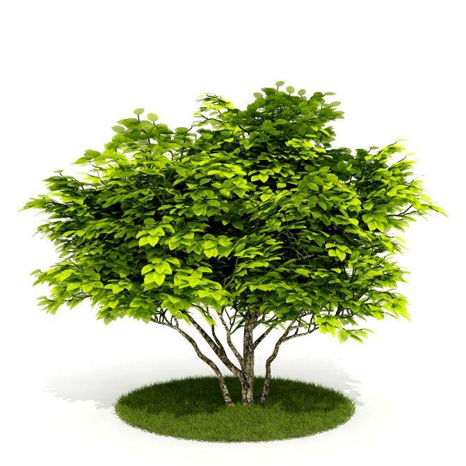 Plant 27 AM52 C4D