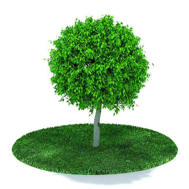Plant 17 AM31 Archmodels