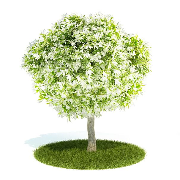 Plant 30 AM52