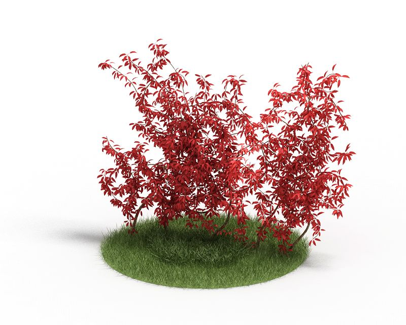 Plant 41 AM4 for Cinema4D Archmodels