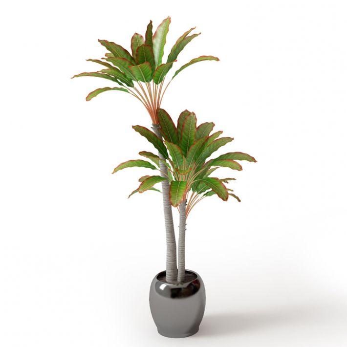 Plant 56 Archmodels vol. 66