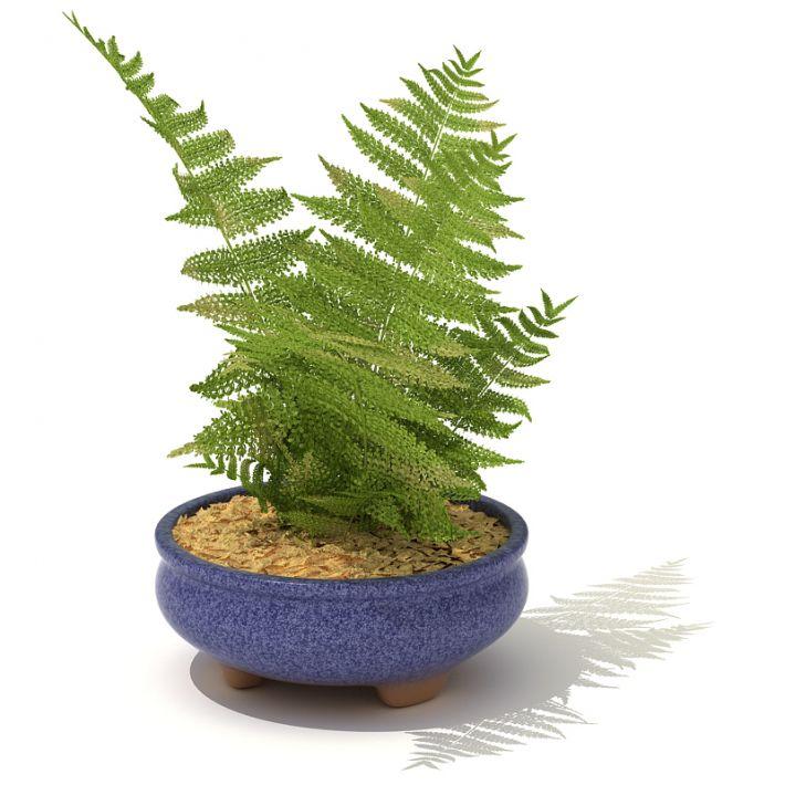 plant 44 AM41