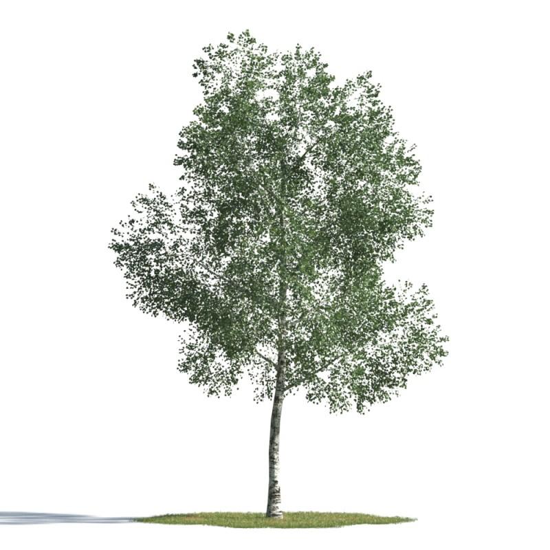 tree 40 AMC1