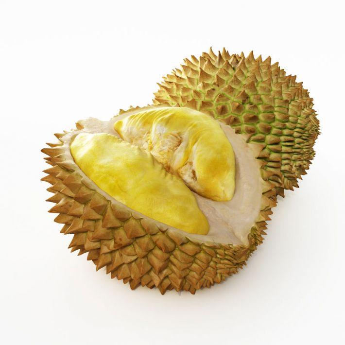 durian 19 AM130 Archmodels