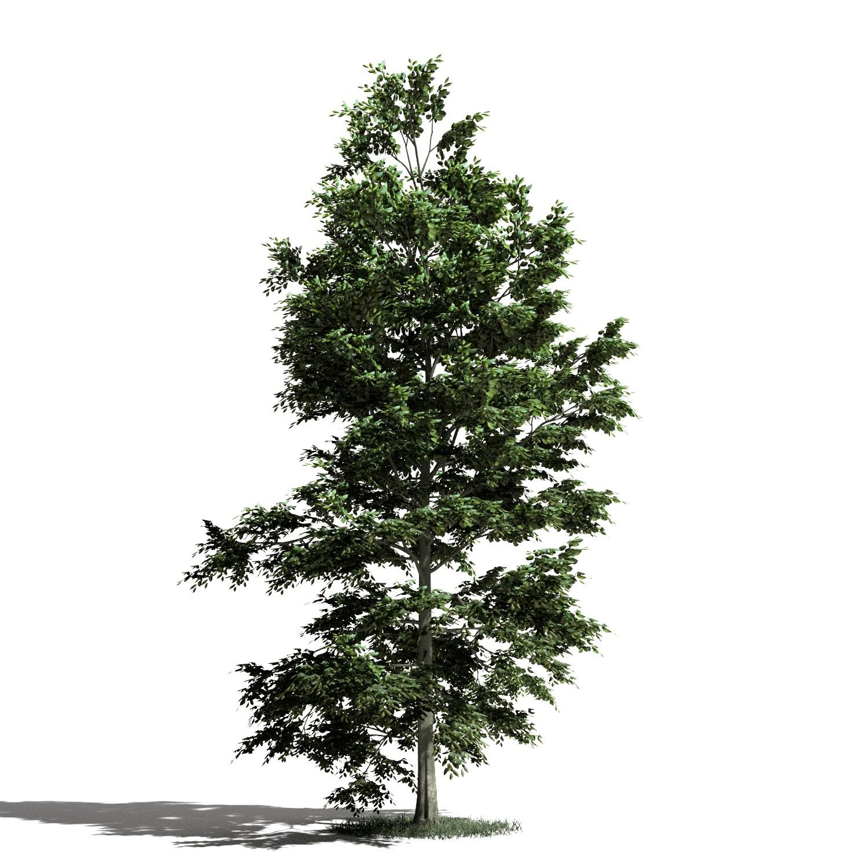 Tree 10 AM1 for Blender Archmodels