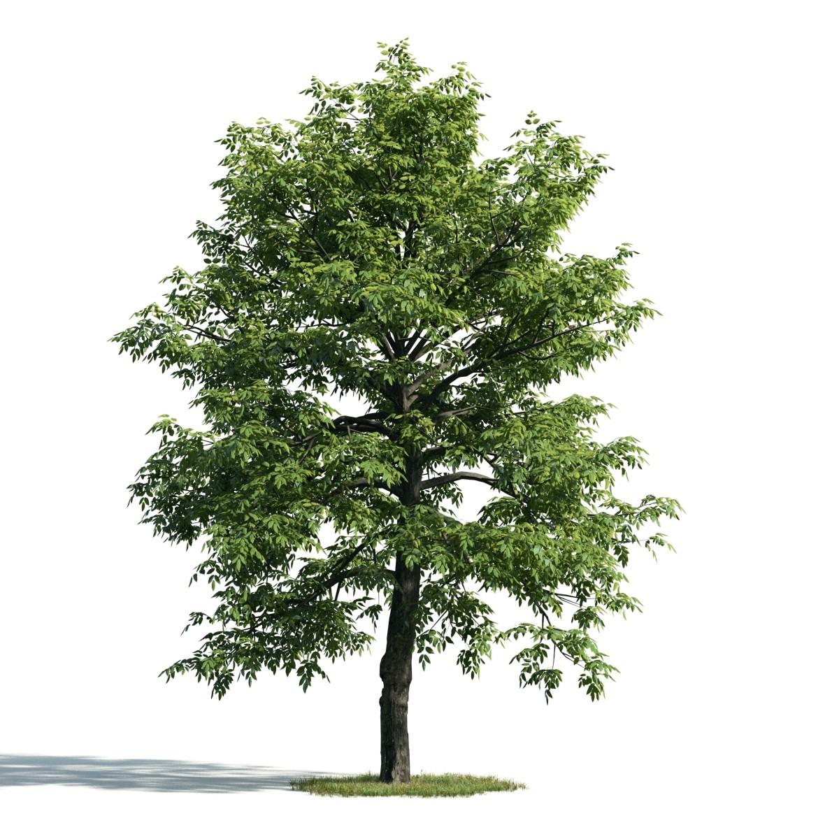 Tree 51 am171