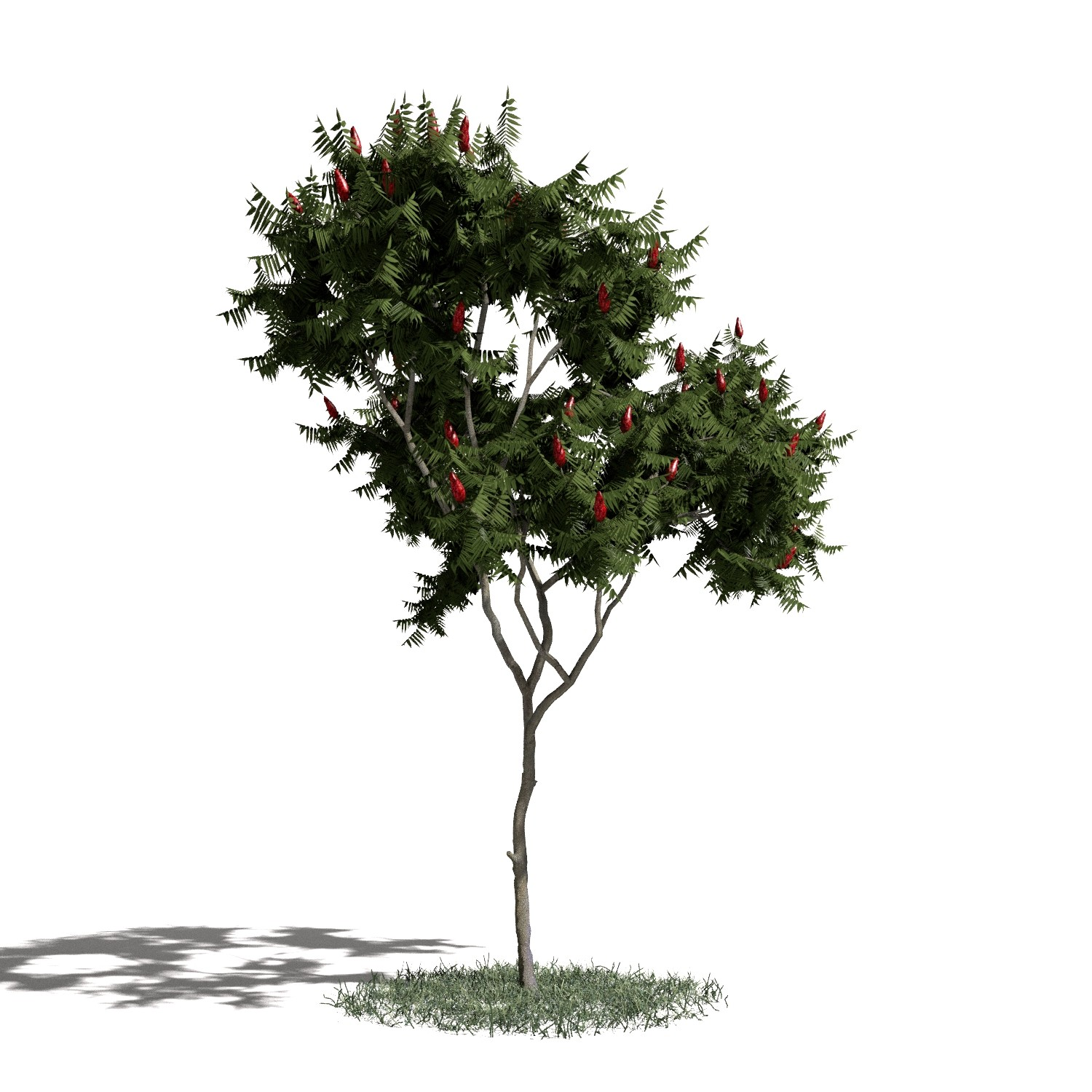Tree 6 AM1 for Blender Archmodels