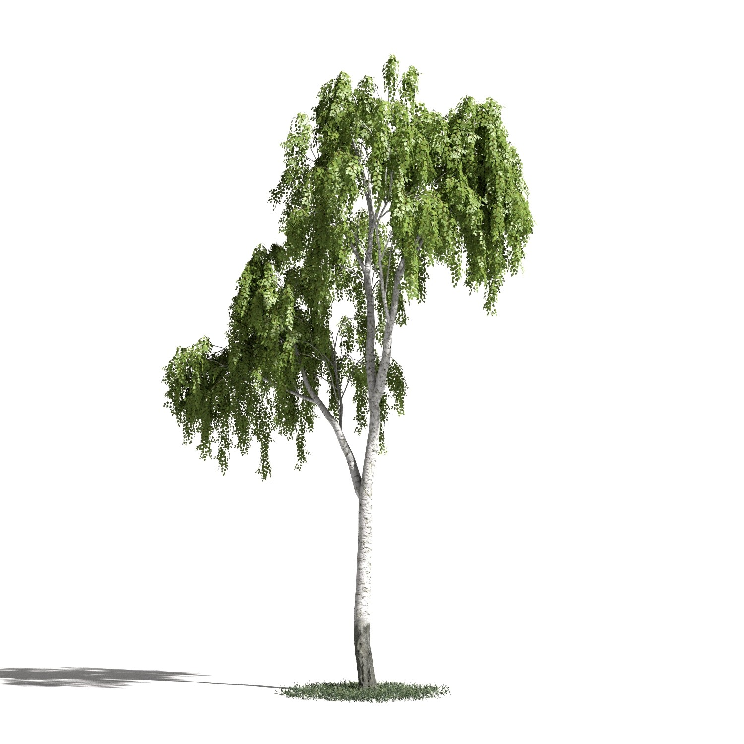 Tree 17 AM1 for Blender Archmodels