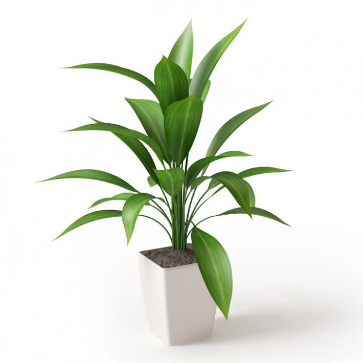 Plant 7 Archmodels vol. 66