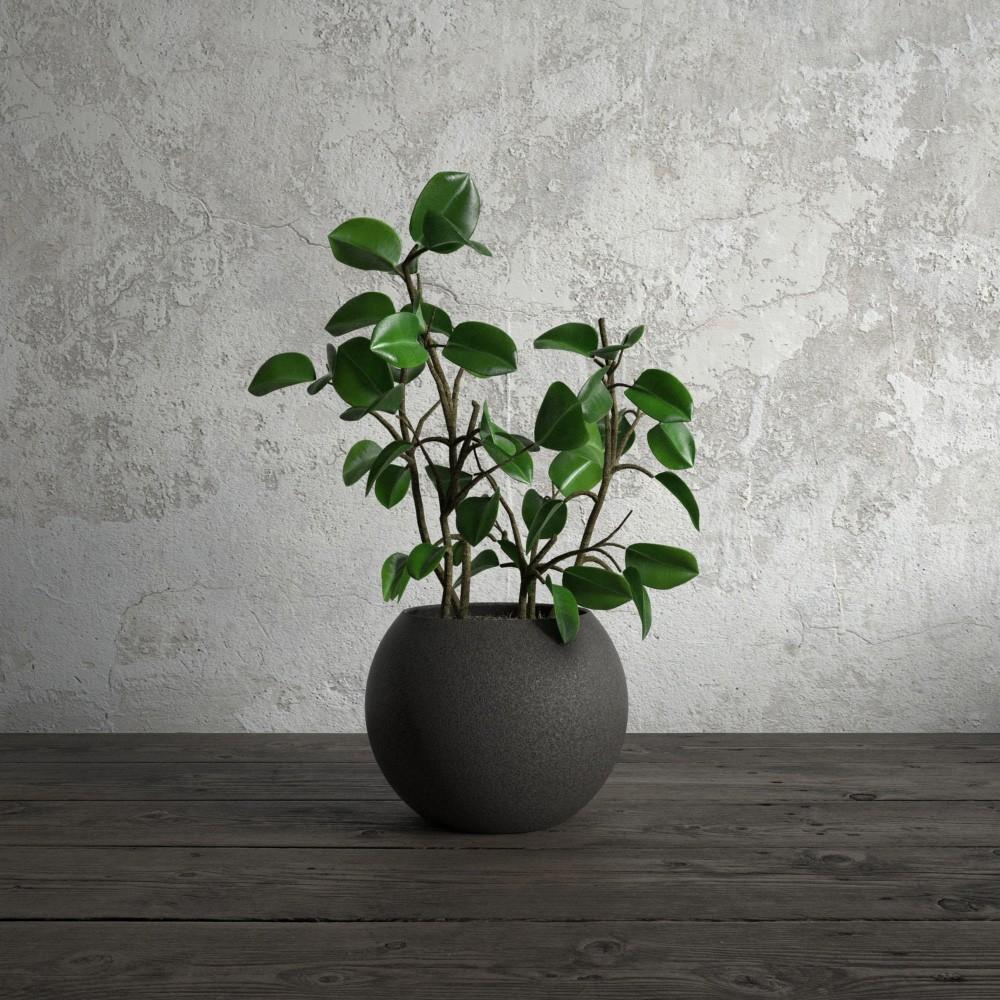 plant 56 AM173 Archmodels