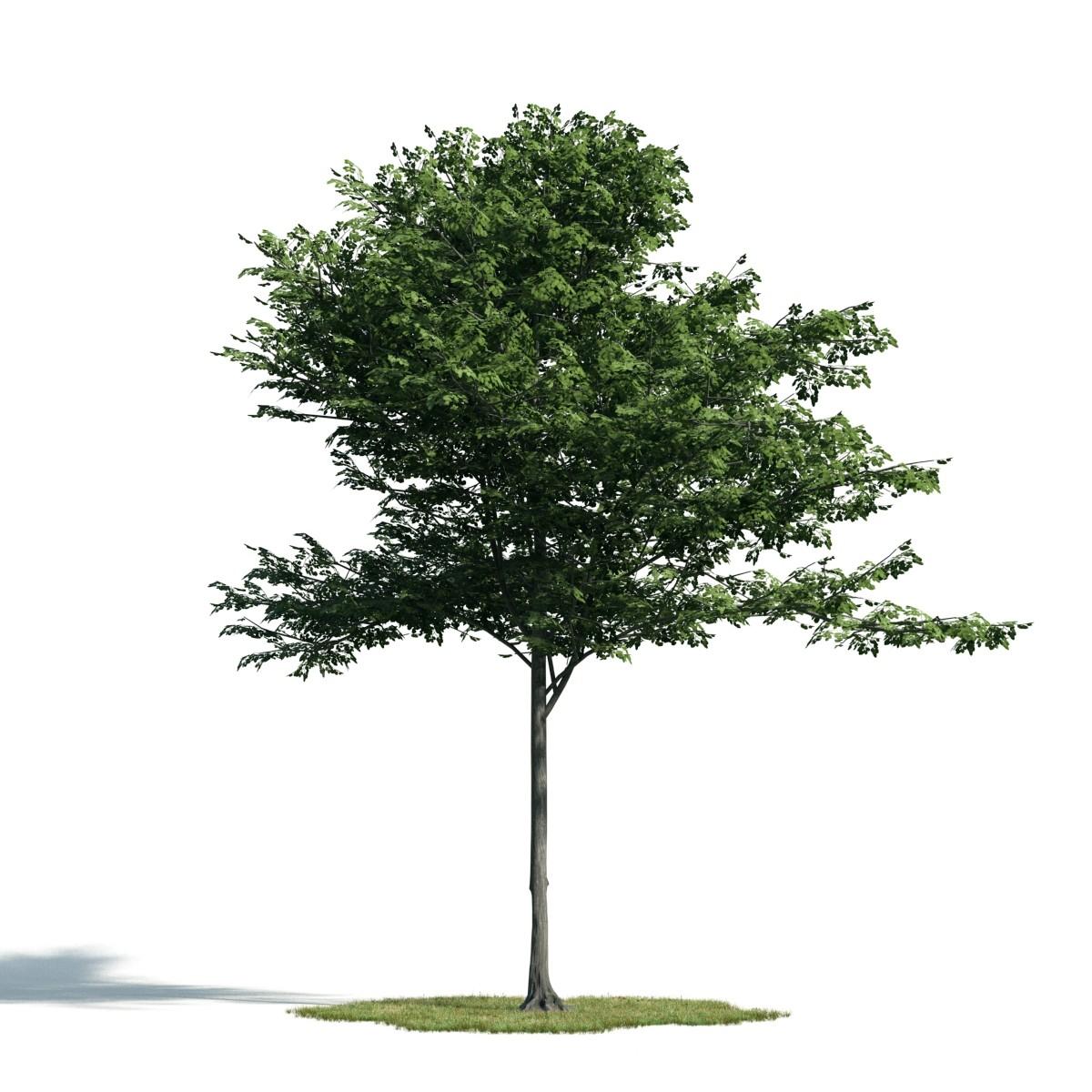 Tree 41 AM171 Archmodels