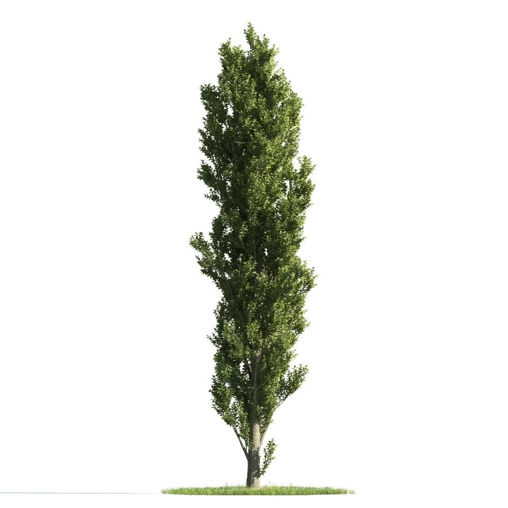 Tree 26 AM176 Archmodels