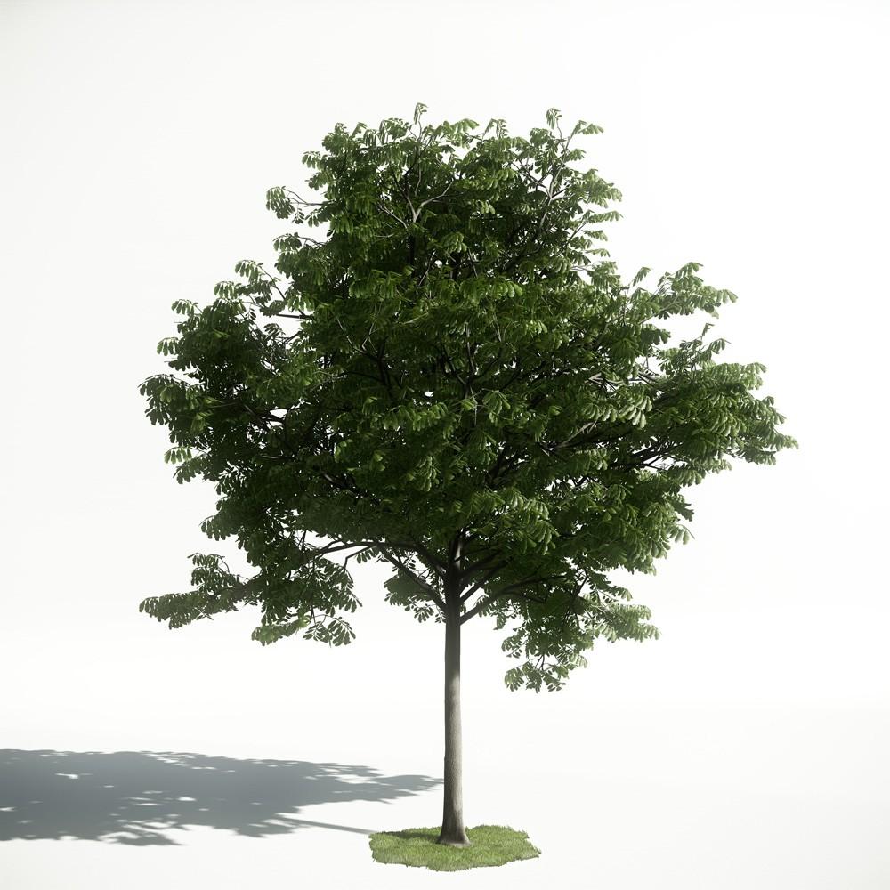 Tree 33 amce1