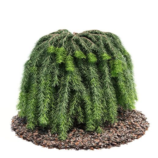 Plant 42 AM52 Archmodels