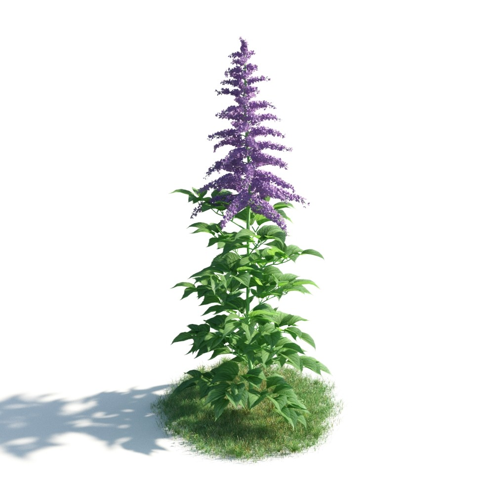 plant 8 AM183 Archmodels