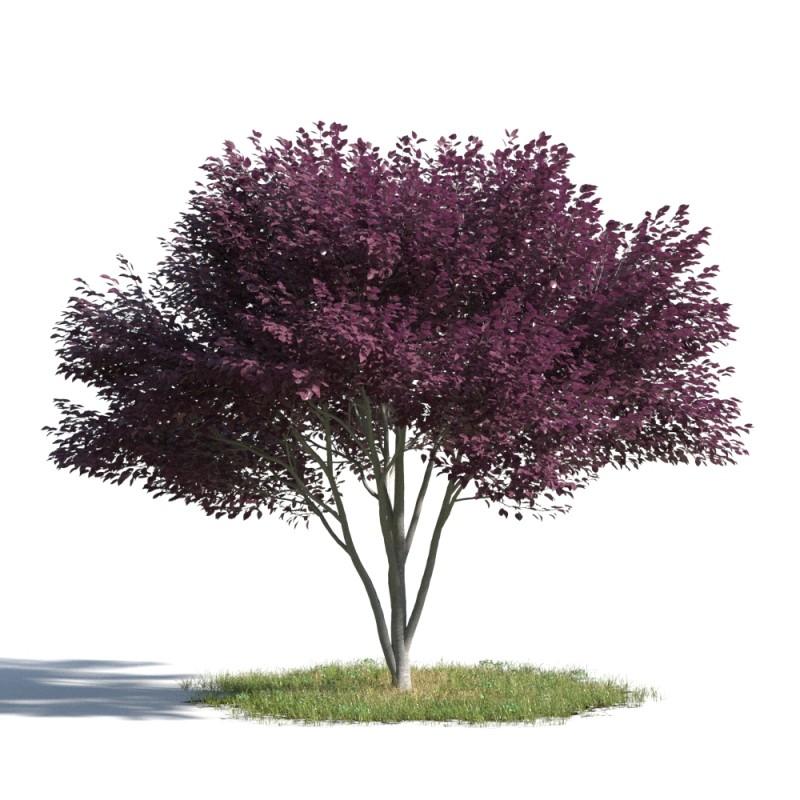 tree 96 AMC1